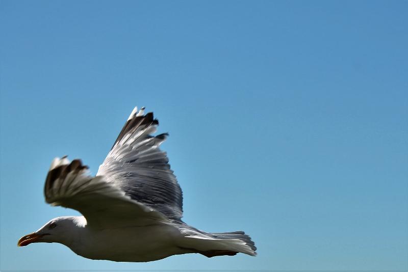 In vogelvlucht....